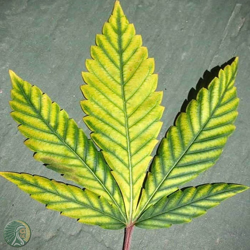 Magnesium in the leaves of the plant