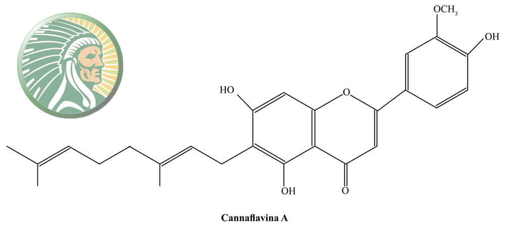 flavonoid content of cannabis plants