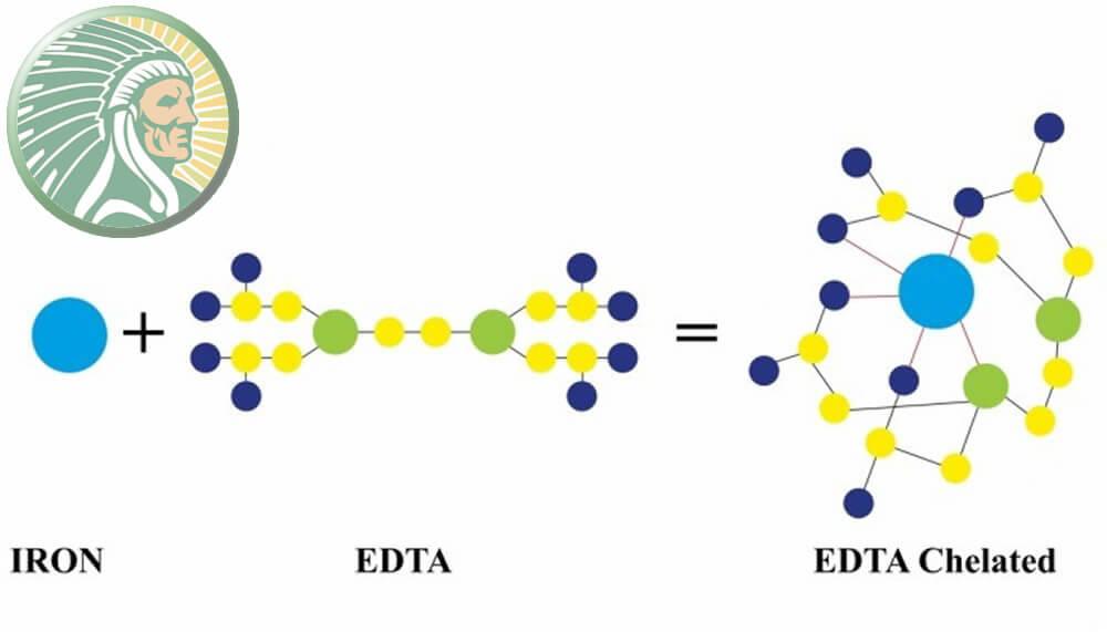 Íon de Ferro + Molécula Orgânica de EDTA = Ferro Quelatado EDTA