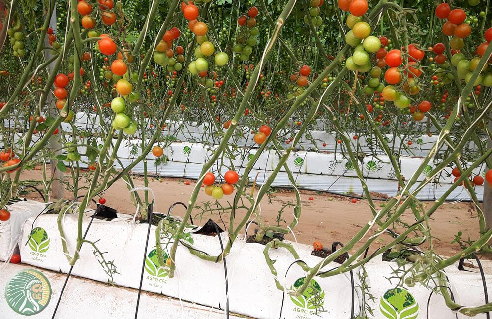 Un bon substrat doit assurer une bonne disponibilité de l'eau, de l'oxygène et des éléments nutritifs.