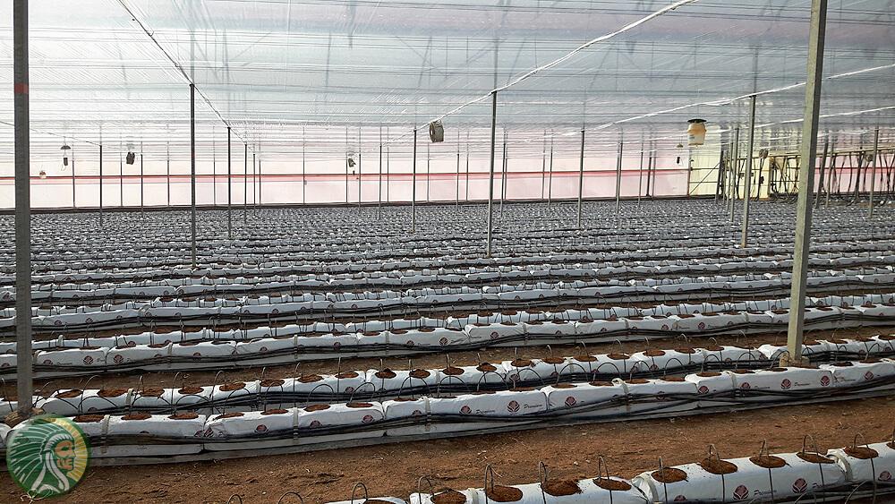 Coltivazione in serra su substrato 100% cocco.