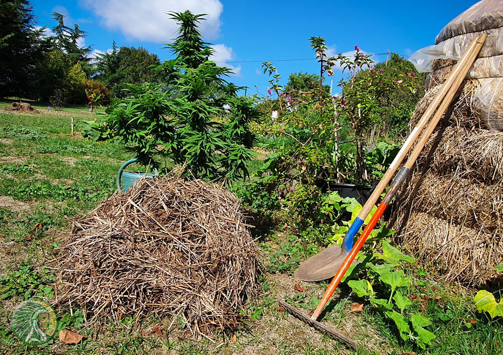 Un ambiente favorevole per la coltivazione della cannabis biologica