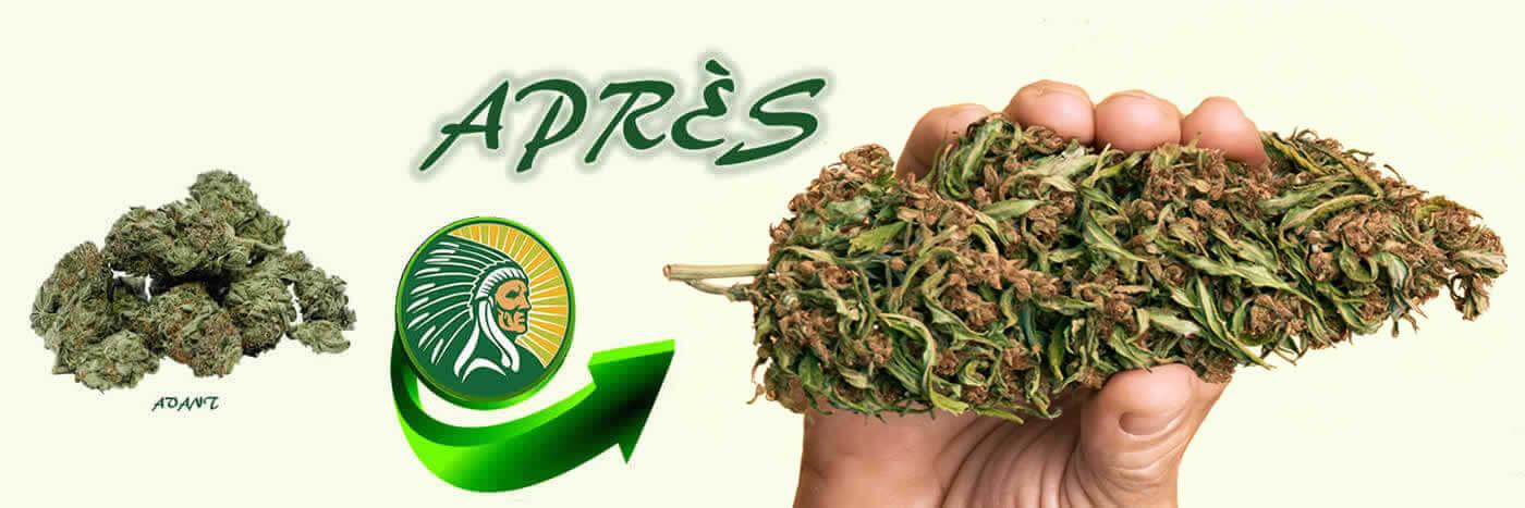 Engrais production cannabis +135%