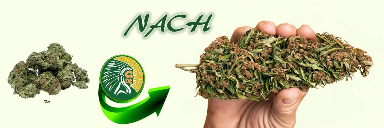 Cannabisproduktionsdünger +135%