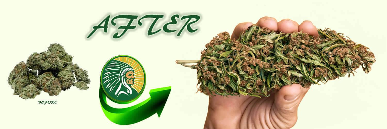 Cannabis production fertilizer +135%