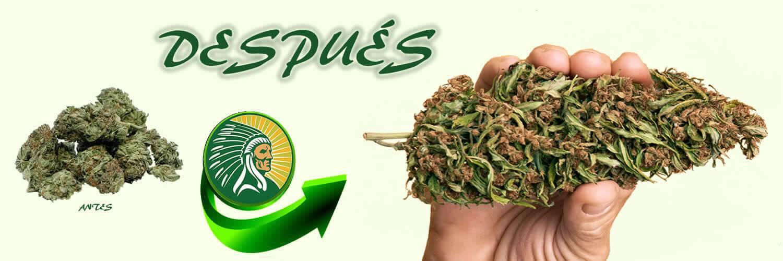 Abono de producción de cannabis +135%