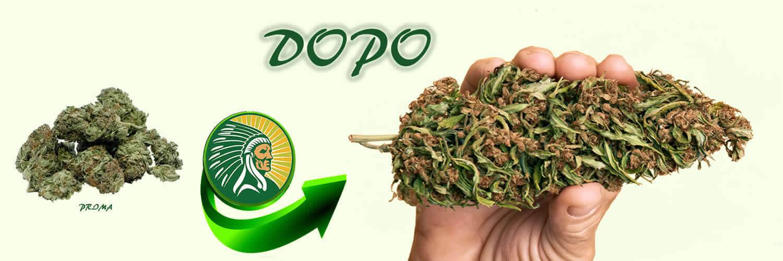 Fertilizzante per la produzione di cannabis +135%