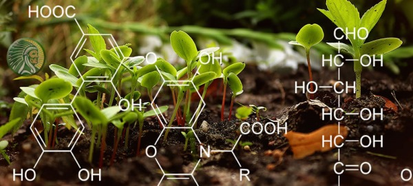 What are Humic Acids for plants?